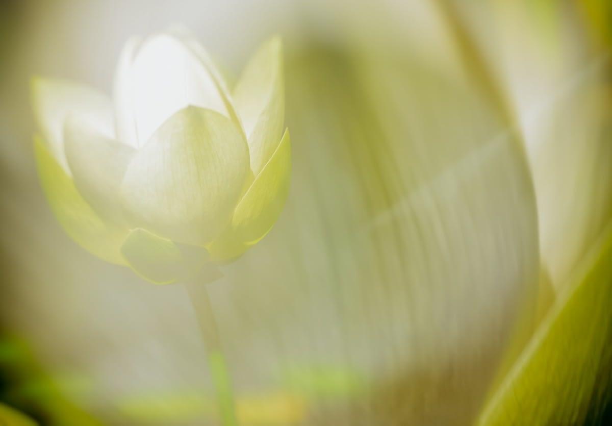 Méditation - Un voyage avec votre Double de Lumière